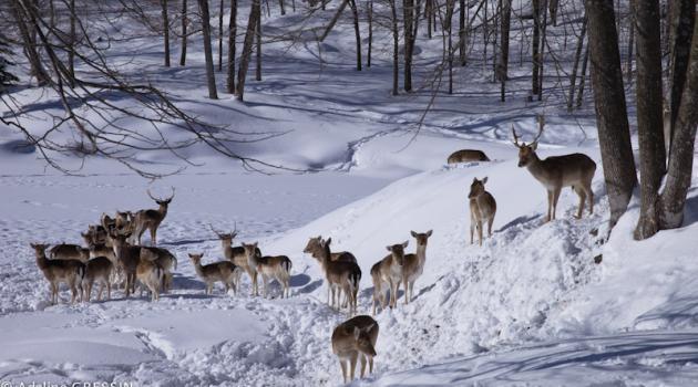 Quelle saison pour visiter le canada