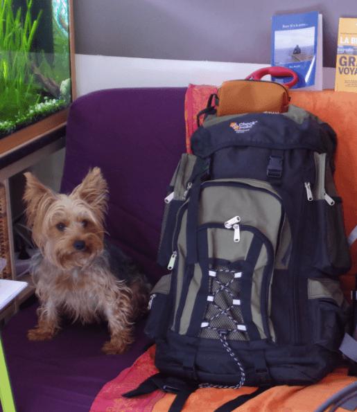 Randonner avec son chien les sacs à dos