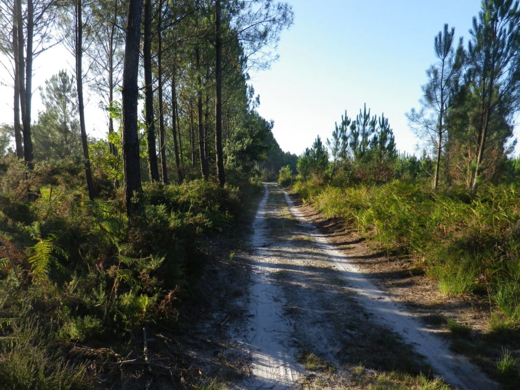 le chemin de Compostelle et de grandes randonnées dans les Landes