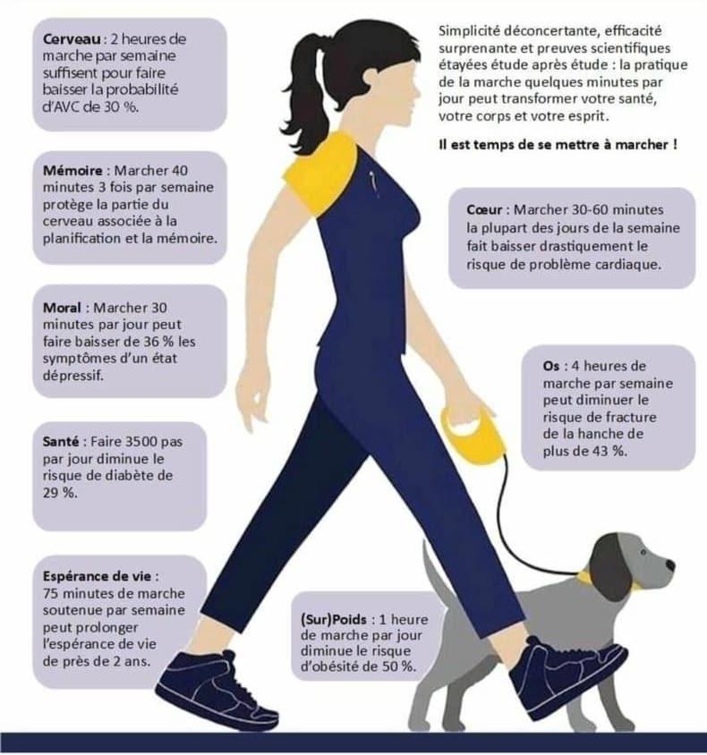 les biens faits de randonner avec son chien