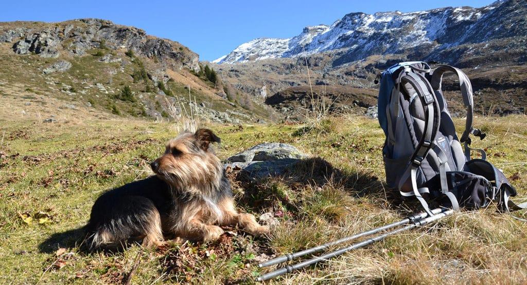 randonner avec son chien en Montagne