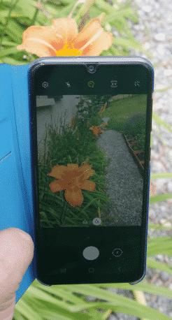 identifier une plante autour du monde la photo