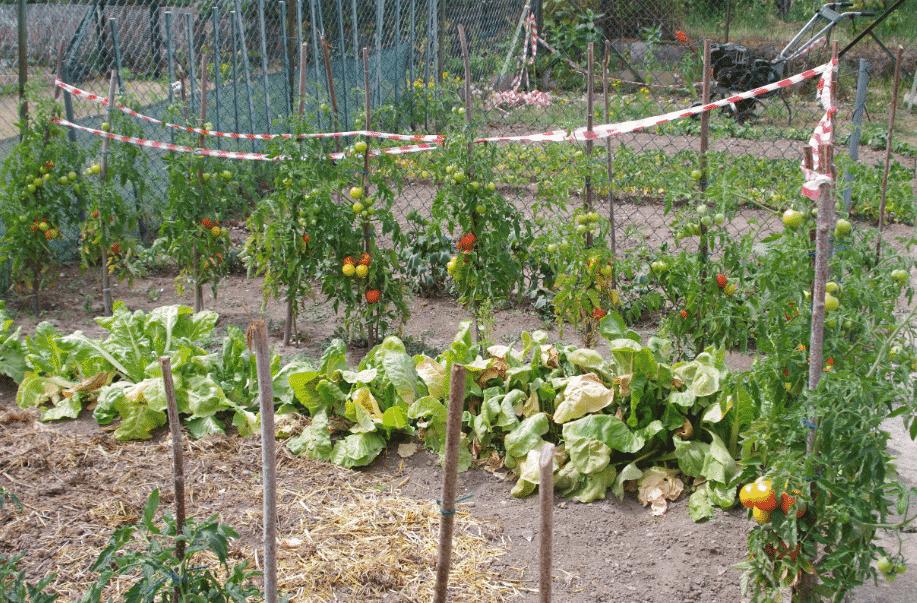 voyager écolo le jardinage