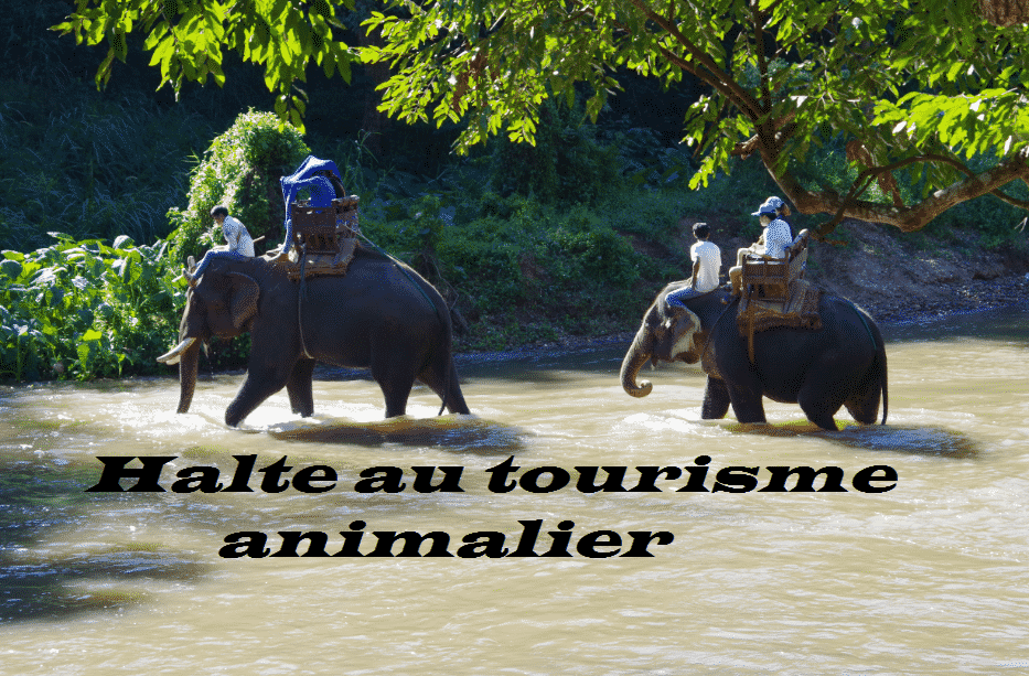 Halte au tourisme animalier