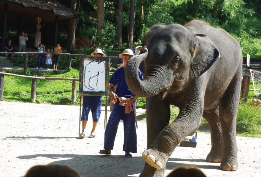 Halte au tourisme animalier.spectacle des éléphants