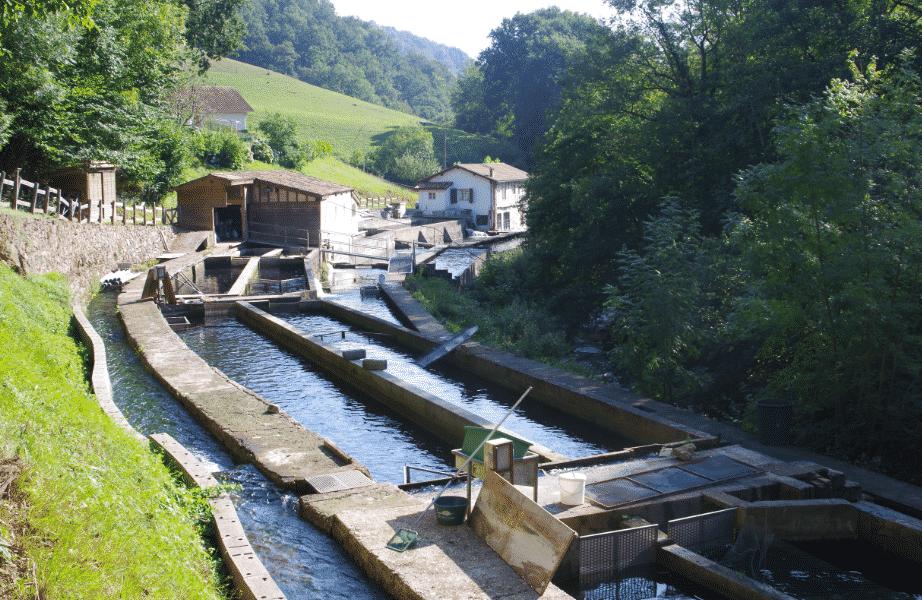 La ferme aquacole de BANCA